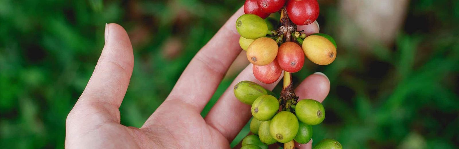 Coffee Pot Of The World – Colombian Coffee Beans